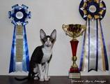 16-17 февраля на Международной выставке JetCat & РосКош Sweet-Rex Image стала 2-м лучшим котенком по TICA