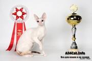 4-5 апреля на Весенней выставке Содружество 2009 Tidgi Dream Squirrel of Sweet-Rex стала BEST OF BEST 2 в первый день и BEST OF BEST 1 во второй день
