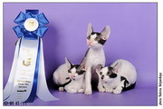 24-25 сентября на Международной выставке Экспокот помет Н...Sweet-Rex выиграл BEST LITTER первого дня
